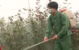 Vì sao Việt Nam chưa cấm sử dụng hoạt chất Glyphosate?