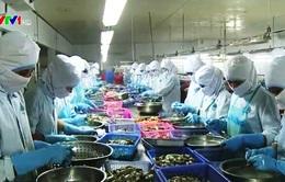 Thủy sản Việt Nam có nguy cơ không vào được EU