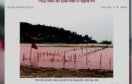 Hiện tượng sông Hoàng Mai không phải thủy triều đỏ