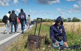 Thụy Điển cần thêm người nhập cư