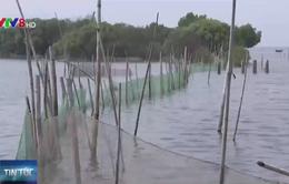 Phân vùng nuôi thủy sản trái phép trong Khu sinh thái Cồn Chim