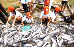 Phải xử lý nghiêm vụ 800 sản phẩm thủy sản làm giả chứng nhận