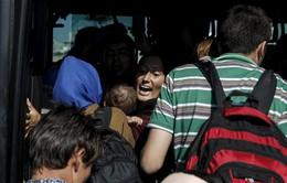 Croatia phát hiện hơn 62 người di cư nhồi nhét trong xe tải