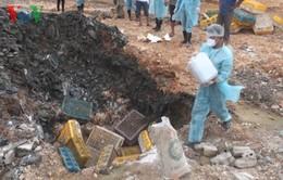 Quảng Ninh: Phát hiện hơn 1 tấn gà nhập lậu đã bốc mùi hôi thối 