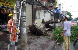 Cấp điện lại cho toàn tỉnh Thái Bình sau bão số 1