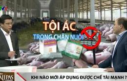 Sử dụng chất cấm trong chăn nuôi là tội ác và sẽ bị xử nặng