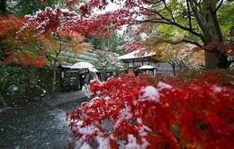 Tokyo đẹp huyền ảo trong những ngày mùa đông sớm