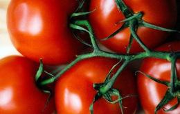 5 lý do bạn nên ăn cà chua