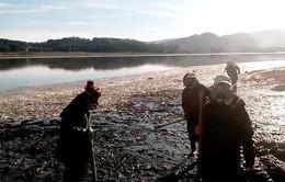 Hàng trăm tấn cá chết trắng, trôi dạt bờ sông Chile
