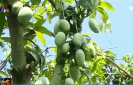 Bảo quản trái cây bằng chất bảo vệ thực vật có thể gây vô sinh?