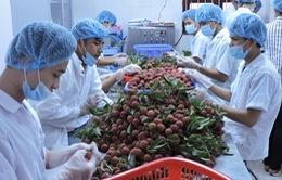 Rau quả xuất khẩu tăng 44% trong 6 tháng