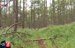 Giây phút cán bộ bảo vệ rừng ở Lâm Đồng bị truy sát qua lời kể của đồng đội