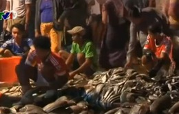 Nhức nhối tình trạng lao động trẻ em tại Myanmar