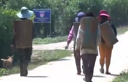 TT - Huế: Nhiều trẻ em vùng cao trốn nhà, theo đường dây lao động trái phép