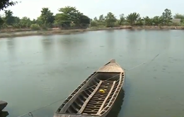 Gần 50% diện tích nuôi cá tra tại Hậu Giang treo ao