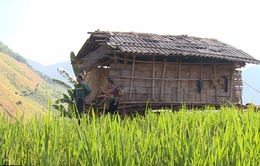 Người dân phải gán đất, trâu bò cho chủ đầu tư trồng ngô