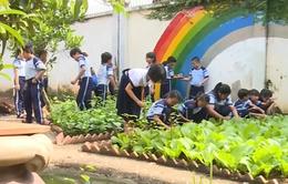 Thú vị mô hình trồng rau sạch trong trường học ở TP.HCM