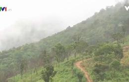 Kon Tum nỗ lực mở rộng diện tích rừng trồng
