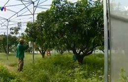 Trang trại cây ăn trái trong nhà kính