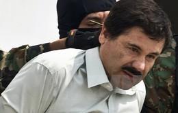 Mexico bắt trùm ma túy khét tiếng El Chapo