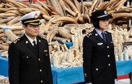 Trung Quốc cấm buôn bán các sản phẩm từ ngà voi