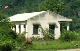 Trường học, trạm y tế thành nơi nhốt bò, cất giấu lâm sản