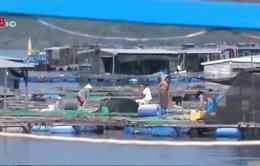 347 sản phẩm thủy sản cấp giấy phép khống đang được lưu hành