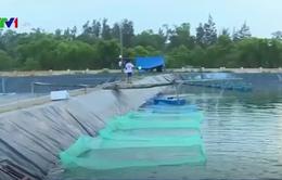 Quảng Trị cấp hơn 900 triệu đồng hỗ trợ ngư dân