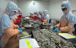 Doanh nghiệp lo mất thị trường xuất khẩu tôm
