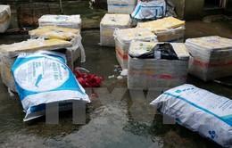 Phát hiện 600kg lợn sữa biến màu, bốc mùi sắp tuồn ra thị trường