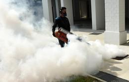 Singapore thông báo đã dập tắt được ổ dịch Zika lớn nhất