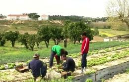 Tù nhân Bồ Đào Nha làm nông nghiệp