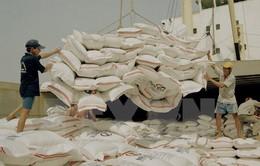 Thái Lan giảm sản lượng lúa gạo niên vụ 2016-2017 còn 25 triệu tấn