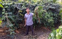 Chàng trai khởi nghiệp từ cây dược liệu ở vùng cao Thái Nguyên