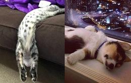 """Muôn kiểu ngủ """"bá đạo"""" của thú cưng"""