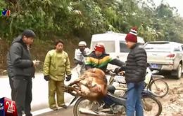 Rét lịch sử, người dân mang trâu bò chết ra bày bán la liệt
