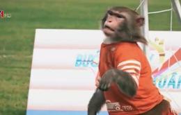 Bất ngờ với tài nghệ chơi thể thao của những chú khỉ