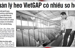 Chăn nuôi chuẩn VietGAP, heo vẫn... dương tính với chất cấm