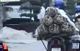 """Nhiều xe chở lợn """"nằm dài"""" ở cửa khẩu, chờ xuất sang Trung Quốc"""