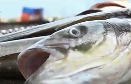 BRVT: Tiến hành hòa giải giữa 33 hộ nuôi cá và 14 DN xả thải
