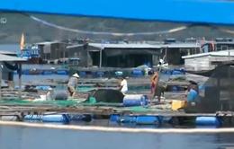 Sai phạm ở Tổng cục Thủy sản: Bộ NN&PTNT chưa công bố 800 vật tư thủy sản