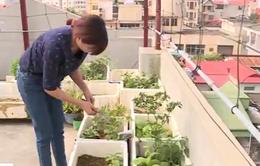 Rau trồng tại nhà có thực sự an toàn?