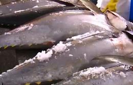 """Cá ngừ Việt Nam """"được mùa"""" trên thị trường EU"""