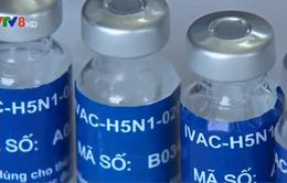 Thử nghiệm giai đoạn 2 vaccine cúm A/H5N1 tại Khánh Hòa