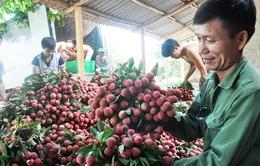 Mở rộng thị trường xuất khẩu cho vải thiều Việt Nam