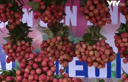 Lượng vải thiều tiêu thụ tại Hà Nội vượt dự kiến