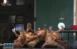 """Cơ quan chức năng """"bối rối"""" khi kiểm tra chất lượng thịt chó"""