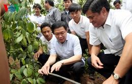 Phó Thủ tướng Vương Đình Huệ làm việc tại Gia Lai