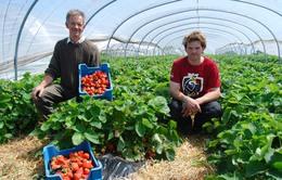 Điểm báo châu Âu: Sản xuất nông sản không dùng hóa chất phát triển mạnh tại châu Âu