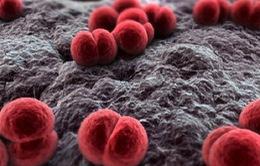 Trẻ đầu tiên tử vong do viêm não mô cầu tại TP.HCM